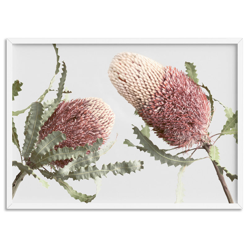 Blushing Banksia Duo Landscape - Art Print, Stretched Canvas, or Framed Canvas Wall Art