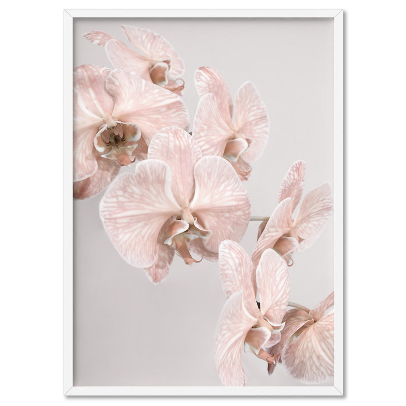 Blushing Orchid Blooms II - Art Print, Stretched Canvas, or Framed Canvas Wall Art