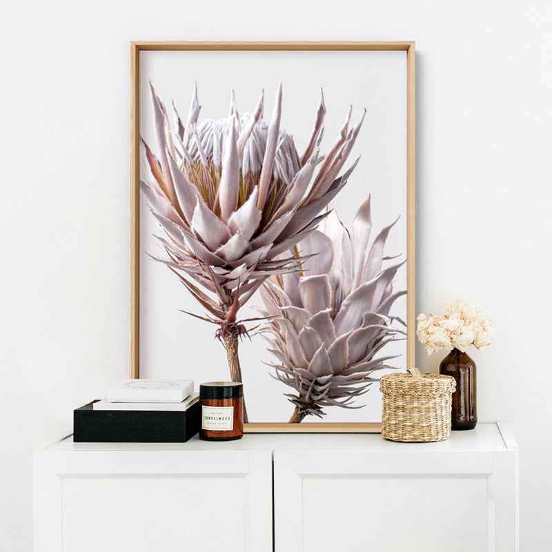 King Protea Duo in Blush - Art Print, Stretched Canvas, or Framed Canvas Wall Art