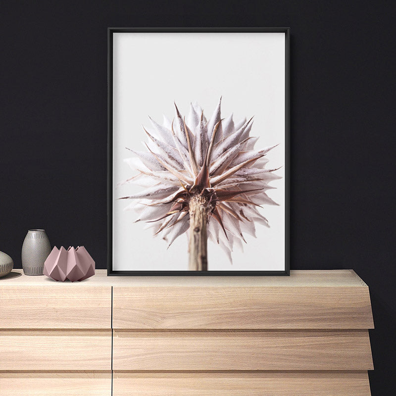 King Protea From Behind in Blush - Art Print
