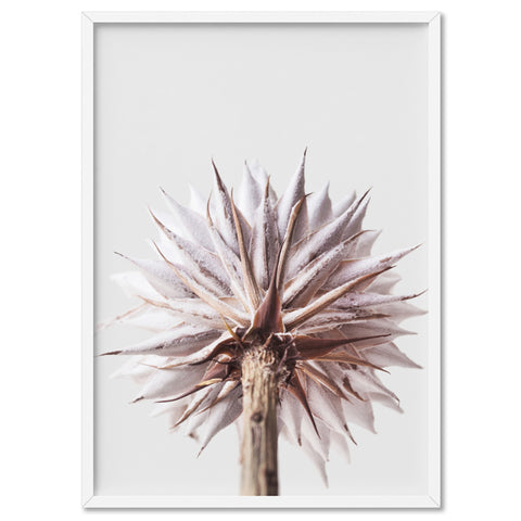 King Protea From Behind in Blush - Art Print, Stretched Canvas, or Framed Canvas Wall Art