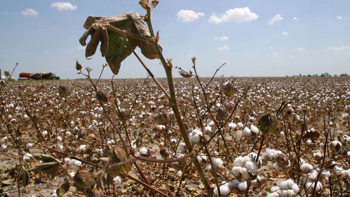 Why Recycle Cotton?