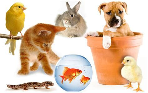 Pampered Pets Collection