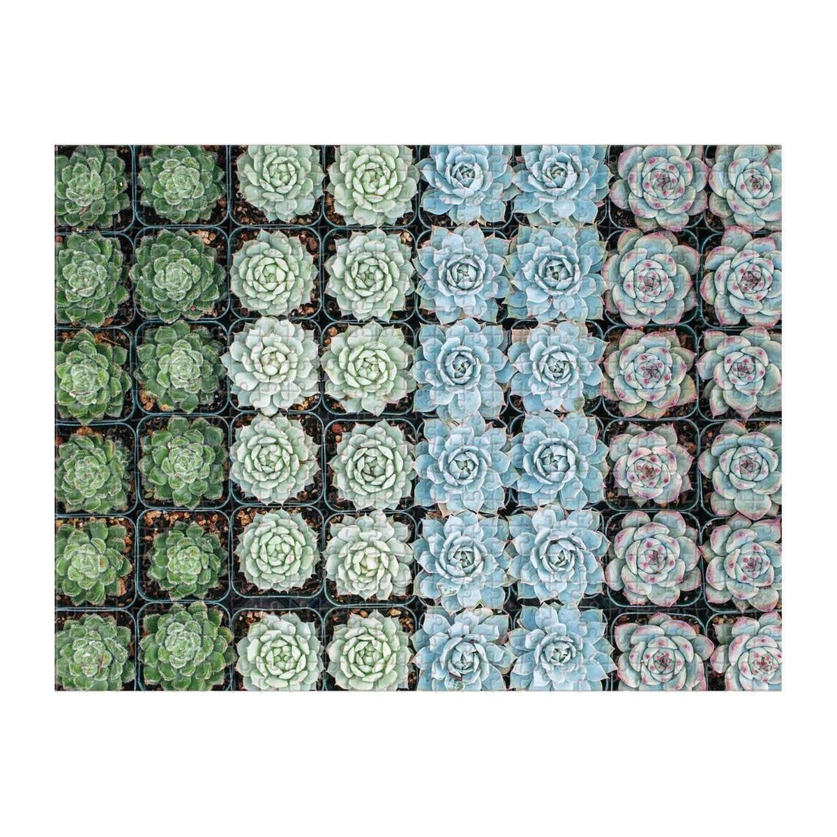 Succulent Garden 500 Piece Double-Sided Puzzle - Quick Ship - Puzzlicious.com