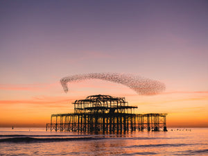 Starling murmuration over Brighton Pier, The home of Red Snapper Sports, Inflatable SUPS