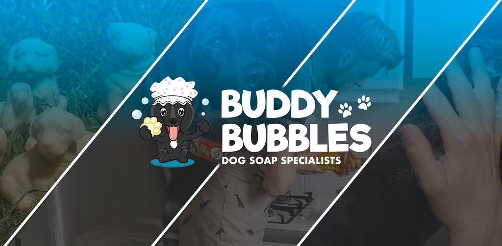 Dog Soap, a new Beginning