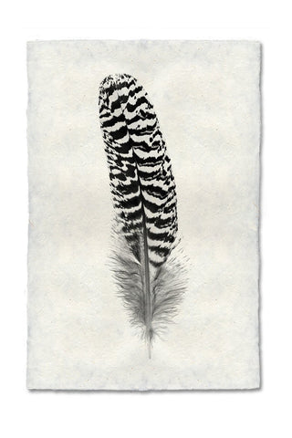 Feather Study #13