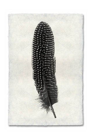 Feather Study #5