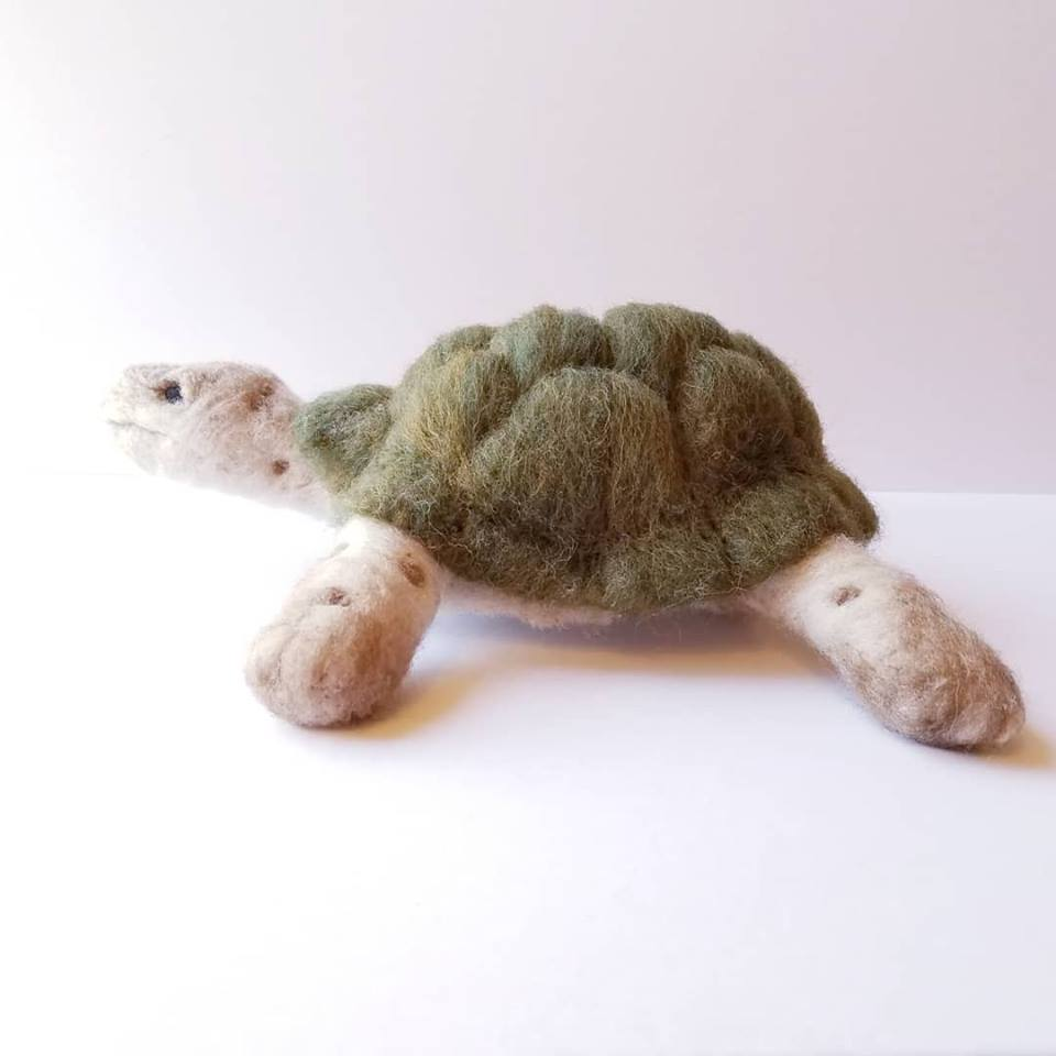 Green Shelled Turtle