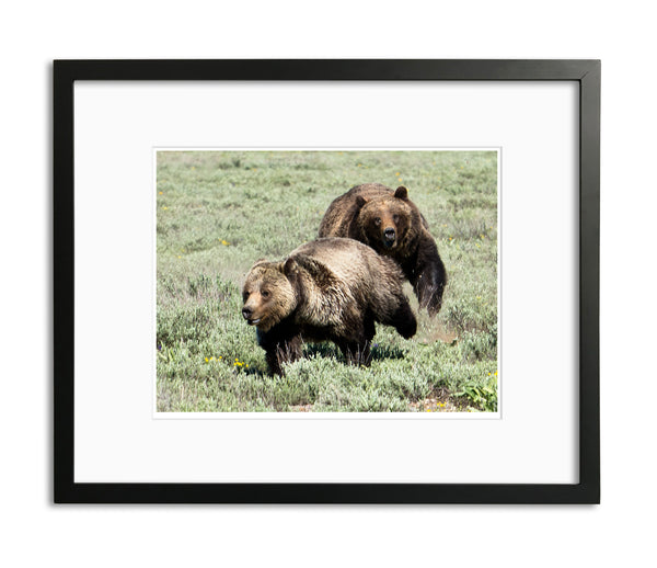 Bear Chase, Grand Tetons, WY, by Robert Ross