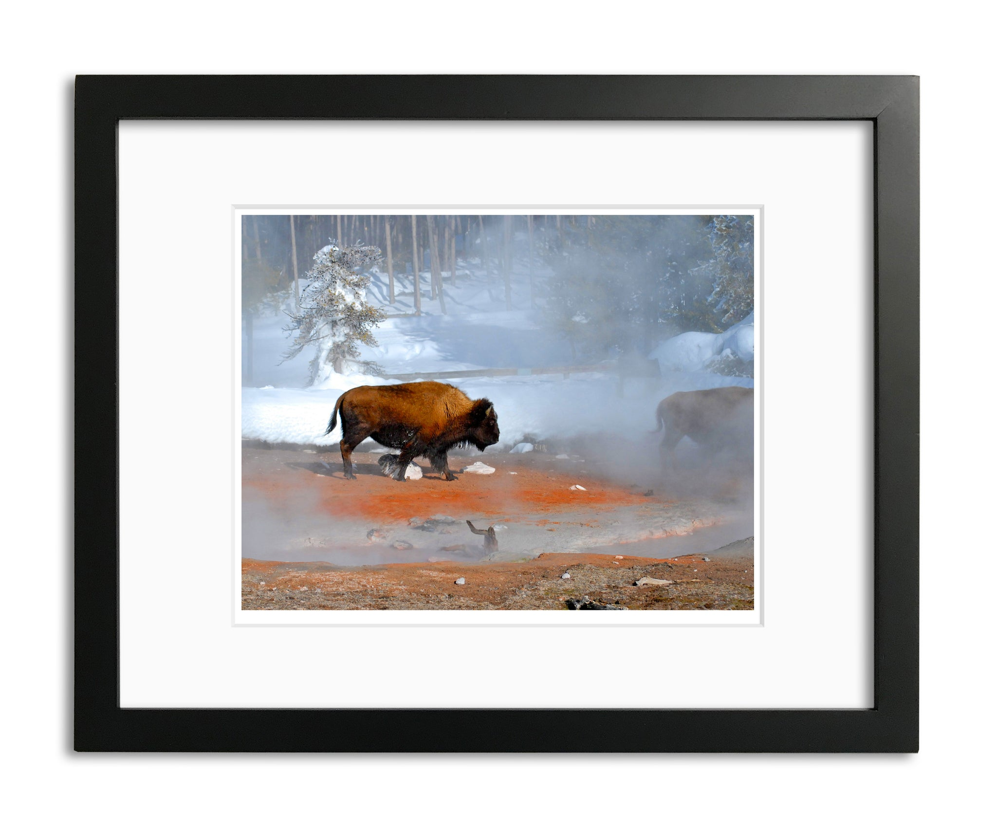 Moment in Time, American Bison, by Robert Ross
