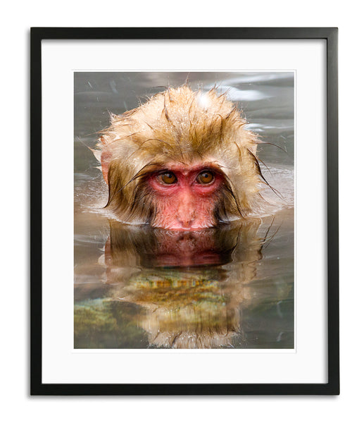 Reflection, Snow Monkey, Japan, by Robert Ross
