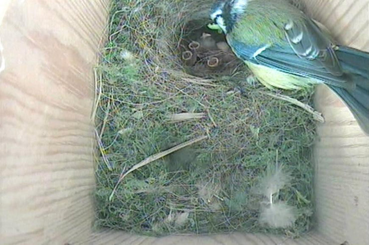 Bird Nest Box With Camera System - Ultra High Resolution