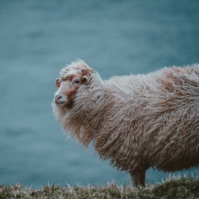 Five ways the properties of wool can purify your soul, your wardrobe and your home