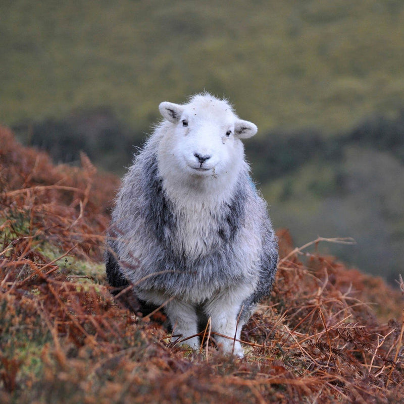 Spreading the wool fabric word - our favourite wool advocates