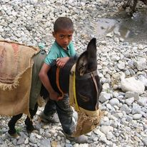 small boy with pack mule