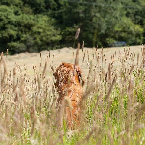 Monty in the meadow