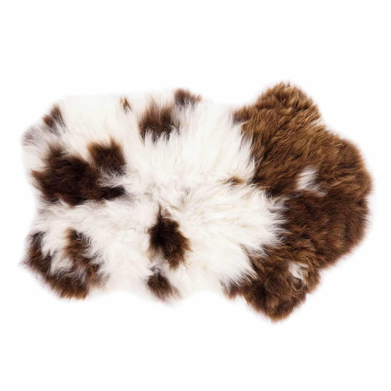 Extra Large British Rare Breed Jacob Sheepskin -  - SHEEPSKIN  from The Wool Company