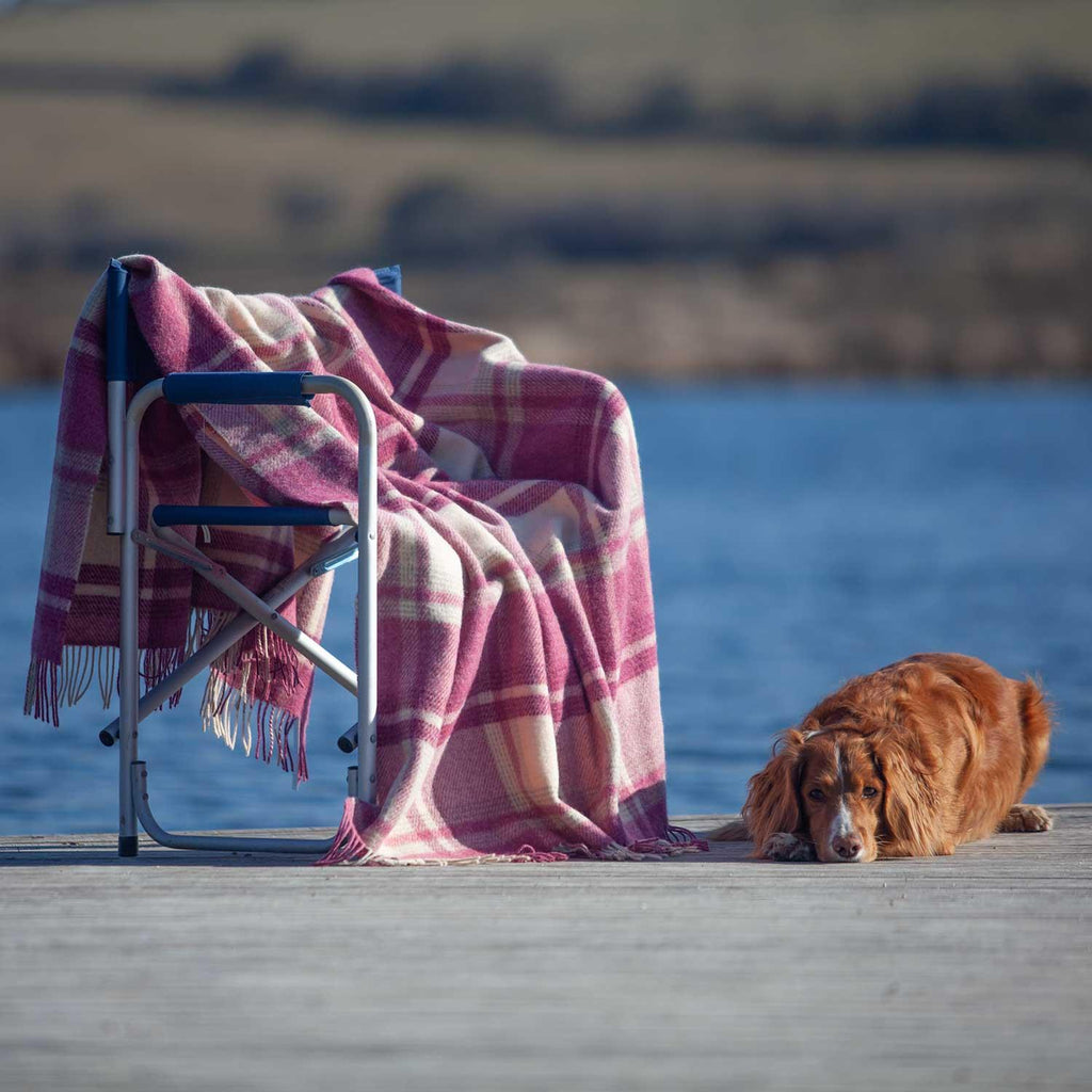 Pink Check Wool Throw -  - LIVING  from The Wool Company
