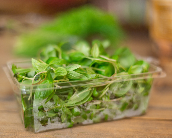 Local Microgreens Grown In Fort Collins