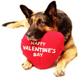 Valentine Day Simple And Easy Dog Treat Recipe❣️Your Pups Gonna Love These!