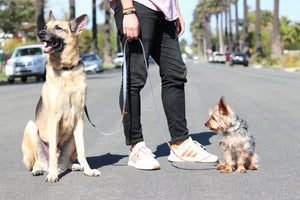 The Santa Monica Crossbody Dog Leash