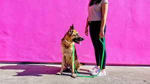 Leather Alternative Dog Leash