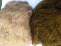 O. olivascens without mordant on left and with iron mordant on right