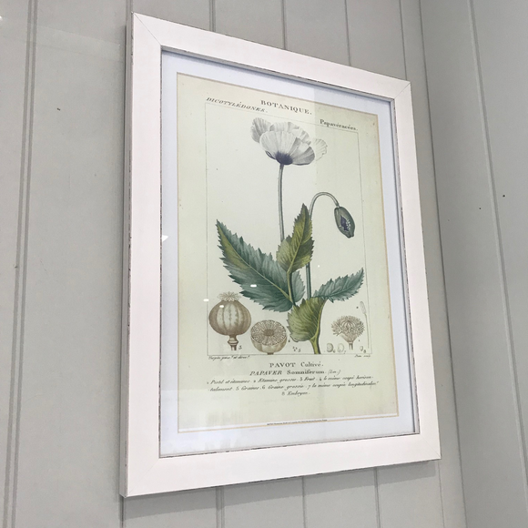 Botanical Framed Wall Art