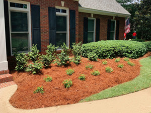 Close-up of Colored Pine Straw in a planted area in front of a brick house