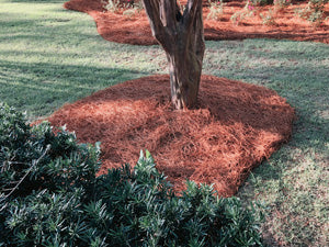 Colored Pine Straw around a tree