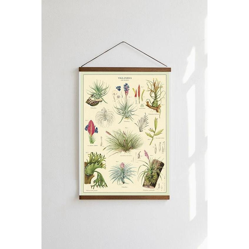 Tillandsia Cavallini Poster - Intrigue Ink Visit Bozeman, Unique Shopping Boutique in Montana, Work from Home Clothes for Women