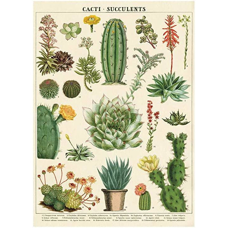 Cacti & Succulents Cavallini Poster - Intrigue Ink Bozeman Boutique