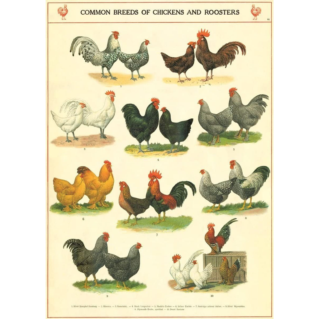 Chickens and Roosters Cavallini Poster - Intrigue Ink Bozeman Boutique