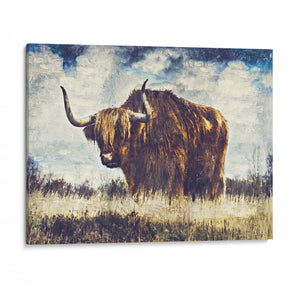 Highland Cattle II