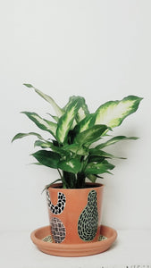 MURSI Collection- Printed Terra Cotta Plant Pot