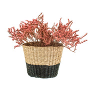 Sass & Belle Black Dip Seagrass Planter