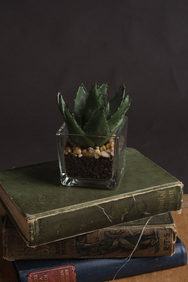Artificial Aloe Vera In Glass Pot