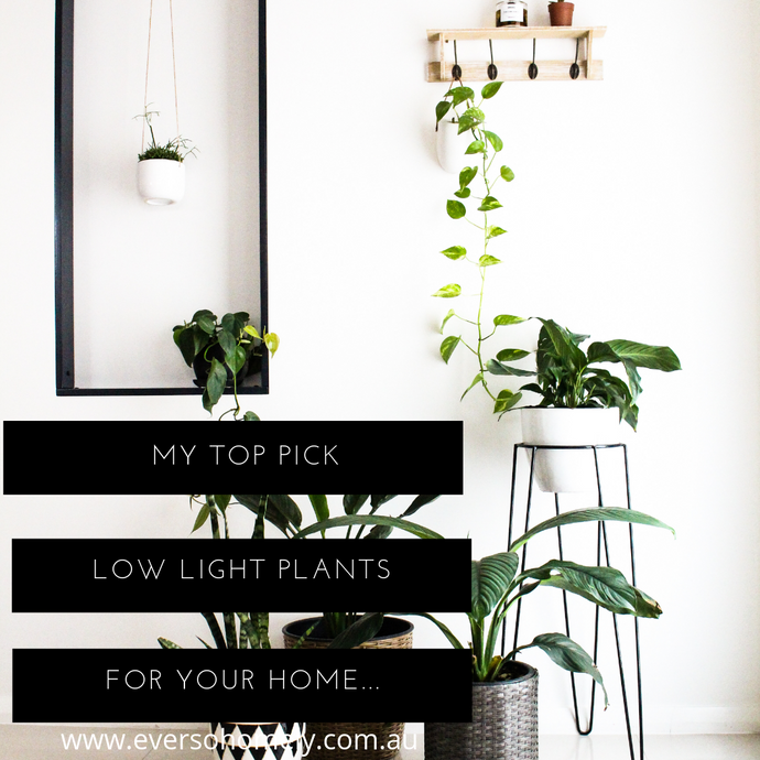 MY TOP PICKS FOR LOW LIGHT INDOOR PLANTS FOR YOUR HOME