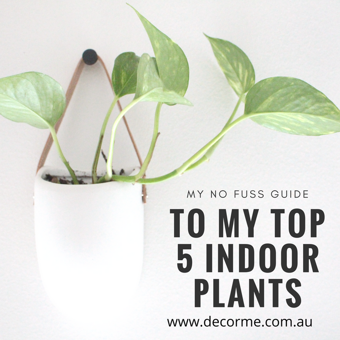 MY TOP 5 no fuss INDOOR PLANTS