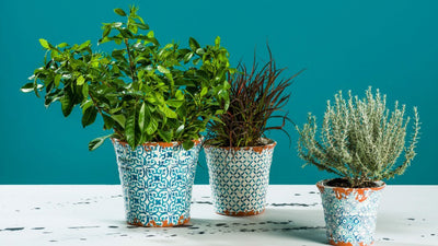 5 Garden Decorations to Jazz up Any Outdoor Space