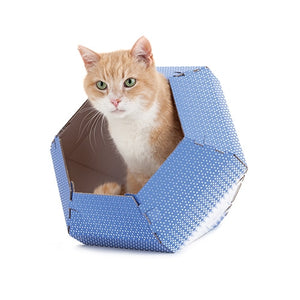 Cat-in-the-box_2