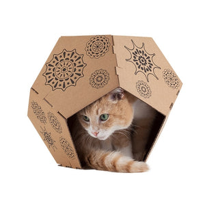 Cat-in-the-box_1