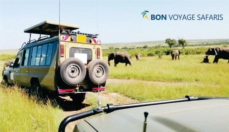 Tourists inside a 4x4 safari jeep enjoying views of African elephants during 6-day Masai Mara Amboseli safari tours