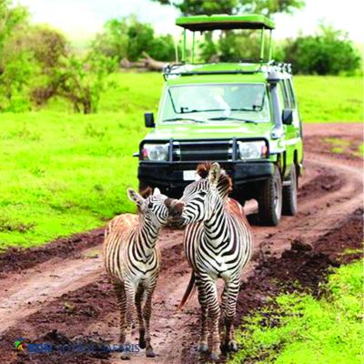 A green 4x4 safari jeep with raised pop up roof being driven by a driver guide next to two zebras in Kenya