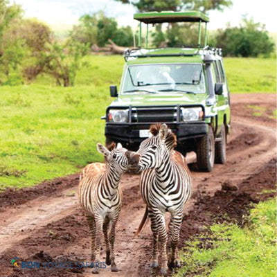 Two zebras walking in front of a safari jeep during a 3-day Masai Mara Safari in Kenya Nairobi
