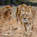 BEST ANIMAL SAFARI KENYA - (4X4 OPEN-SIDE JEEP TOUR)