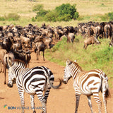7-Day Private Group/Family Jeep Tour - (with FREE NIGHT ACCOMMODATION at Nairobi Airport Hotel)