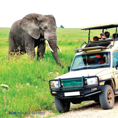 Cheap 4-Day Nakuru & Masai Mara Safari Tour
