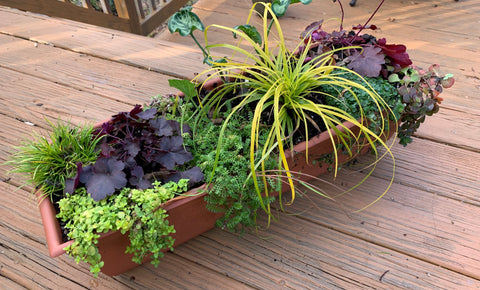 WINTER CONTAINER PLANTS